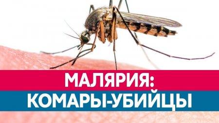 Малярия. Рекомендации для путешественников.